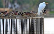 Birds apparently ticked off at no-feeding policy in Melbourne