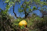 Putnam ordered to pay $16.9M in citrus lawsuit